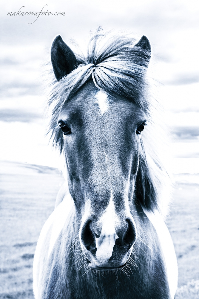 Horse, Iceland, travel photography, makarovafoto