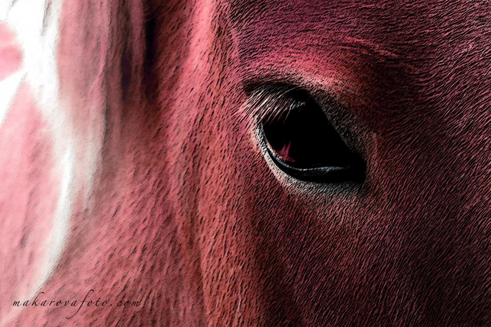 Red Horse Eye Makarovafoto.com