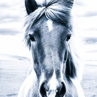 Horse, Iceland, travel photography, makarovafoto