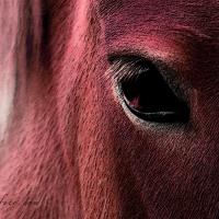 Red Horse Eye Makarovafoto.com