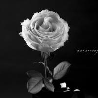 Black&White Flower Makarovafoto.com