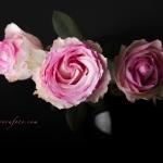 Pink Flowers Makarovafoto.com
